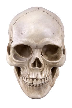 Menselijke schedel (cranium) op wit wordt geïsoleerd Stockfoto