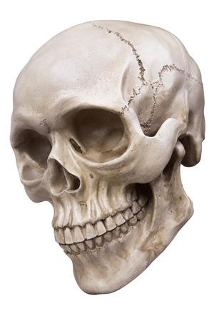 cranium: Human skull (cranium) isolated on white  Stock Photo