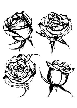 Vector illustration flower rose set Vector