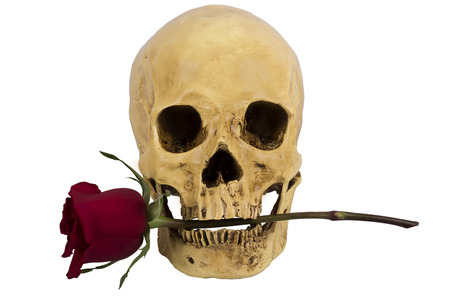 Skull of person with red rose in teeth photo