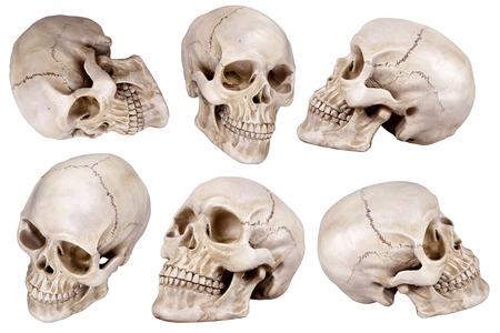 partes del cuerpo humano: Cráneo humano (cráneo) conjunto aislado sobre fondo blanco Foto de archivo