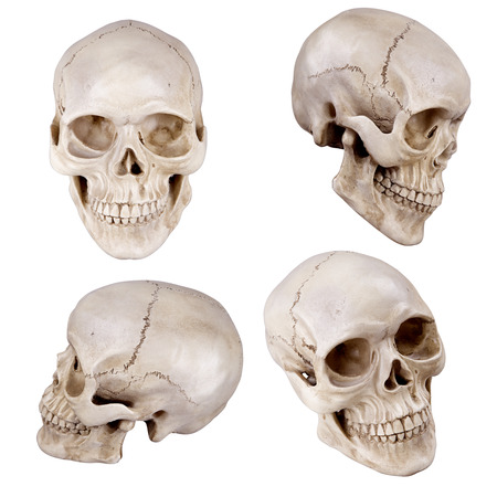 Human skull (cranium) set isolated on white background photo