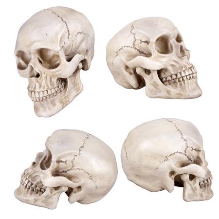 cranium: Human skull (cranium) set isolated on white background