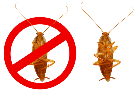 Brown household cockroach and a stop sign Stock Photo