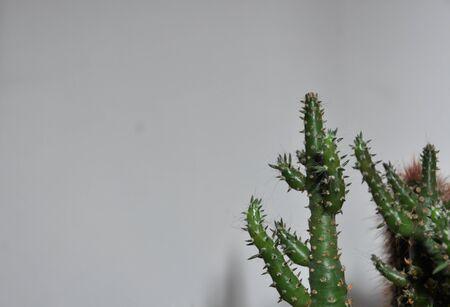 savers: The world of cacti Stock Photo