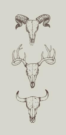 animal skull heads on gray background, Vector illustration.