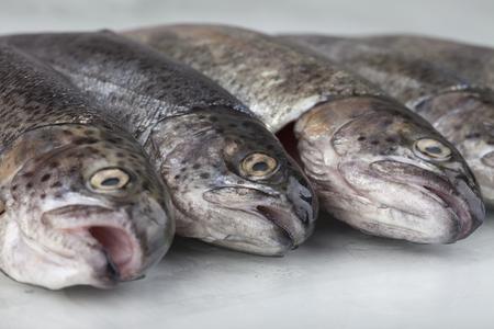 Fresh trout on white ground