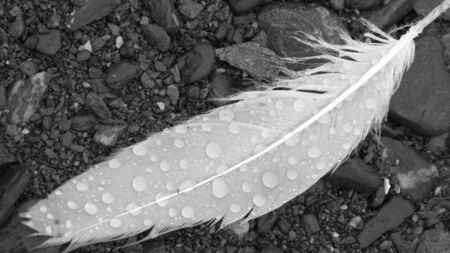 Wet Feather B&W Фото со стока