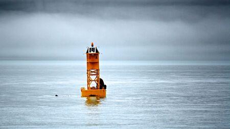 Lone sea lion