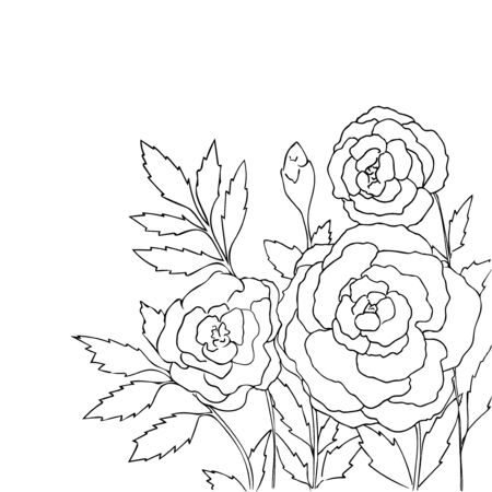 peon: Beautiful roses isolated on white background. Hand drawn vector illustration with flowers. Retro floral card. Romantic delicate bouquet. Element for design. Contour lines and strokes. Coloring page. Illustration
