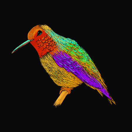 black plumage: Hummingbird with colorful glossy plumage. Modern pop art style. Colorful bird, black background. Vector illustration of colibri for greeting card,invitation,print,web project. Bright and vivid colors.