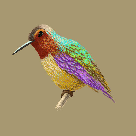 Hummingbird with colorful glossy plumage. Colorful bird illustration on beige background. Vector drawing of colibri for greeting cards, invitations, prints, web projects. Bright and vivid colors.