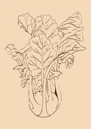 Hand draw brown line Kohlrabi cabbage isolated on beige background. Vegetable vector illustration. Vintage engraving. Fresh organic sketch. Vegetarian and vegan green food ripe harvest. Kitchen design