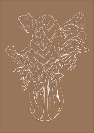 Hand draw white line Kohlrabi cabbage isolated on beige background. Vegetable vector illustration. Vintage engraving. Fresh organic sketch. Vegetarian and vegan green food ripe harvest. Kitchen design Illustration