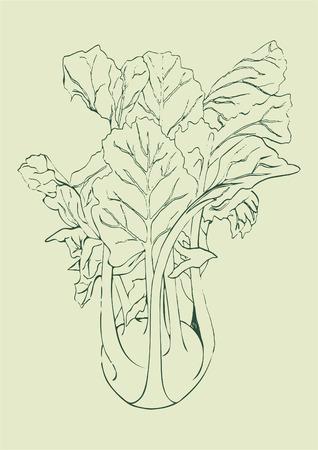 Hand draw line Kohlrabi cabbage isolated on light green background. Vegetable vector illustration. Vintage engraving. Fresh organic sketch. Vegetarian and vegan green food ripe harvest. Kitchen design
