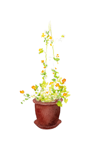 Watercolor garden flower in pot isolated on white background. Hand drawn Bindweed illustration.??????? Bright summer drawing. Design element for decoration.