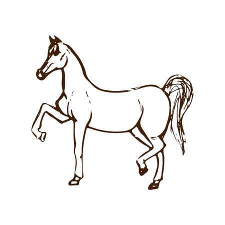 Hand drawn sketch of horse. Brown line drawing isolated on white background. Vector animal illustration.