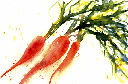 Sweet carrot brunch isolated on white background. Fresh vegetable with leaves. Watercolor sketch illustration Hand drawn painting. Vegetarian organic food. Good for magazine or recipe book, poster, card design, menu cover.