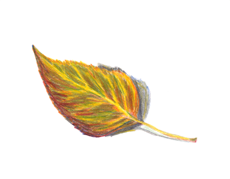 Autumn leaf birch. Isolated on a white background. Colored pencils technique. Hand drawn illustration.