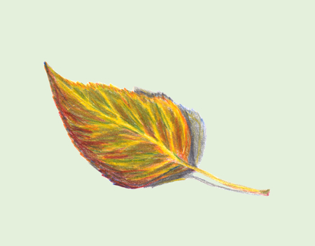 Autumn leaf birch. Isolated on a light green background. Colored pencils technique. Hand drawn illustration.