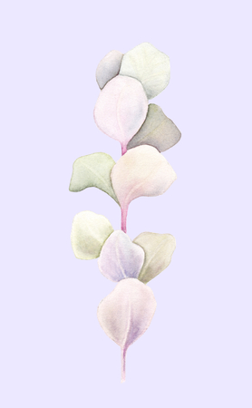 Eucalyptus brunch with leaves isolated on light purple background. Watercolor hand painted illustration. Botanical realistic art. Banco de Imagens