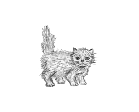 Hand drawn illustration of cat isolated on white background. Little fluffy kitten. Animal sketch pencil drawing. Cute pet.