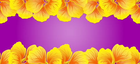 Nasturtium Seamless border. Yellow flowers. Beautiful Horizontal banner. Bright pink background. Card, invitation, poster, greeting design. Vector illustration. Exotic template.Decorative floral frame