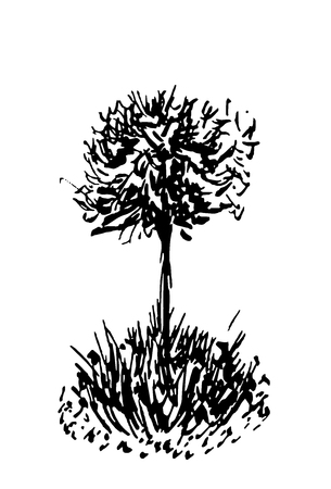Tree sketch.Vintage illustration, engraved style. Hand drawn ink. Back line drawing Isolated on white  background. For landscape, park, outdoors design. Фото со стока