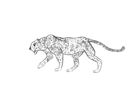 Cheetah prowling. Black line drawing Isolated on light gray background. Hand drawn illustration. Pencil sketch. Profile of African predator. Walking animal. Фото со стока