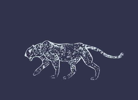Cheetah. Hand drawn ink sketch. Horizontal drawing. Vector engraving. Predator line art. White line illustration isolated on dark blue background. Safari concept. Banco de Imagens