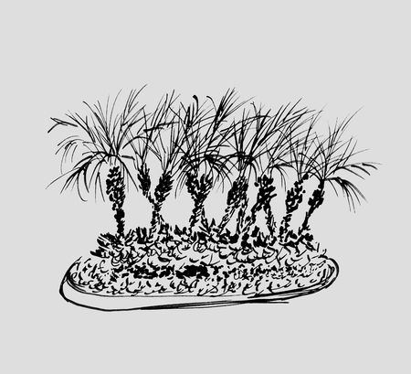 Tropical palm trees isolated on light gray background. Illustration of coconut palms group. Black silhouettes. Hand drawn sketch. Фото со стока