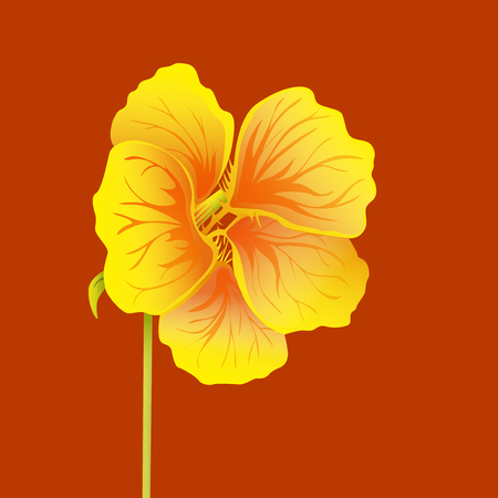 Beautiful nasturtium isolated on red background. Yellow and orange bright flower. Botanical realistic art. Hand drawn detailed vector illustration. Banco de Imagens