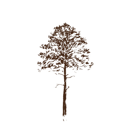 Pine tree. Brown line drawing Isolated on white Background. Hand drawn vector illustration. Pencil sketch. Ilustração