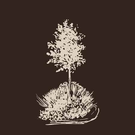 Tree vector sketch.Vintage illustration, engraved style. Hand drawn ink. Line drawing Isolated on dark background. For landscape, park, outdoors design. Brown and beige colors.