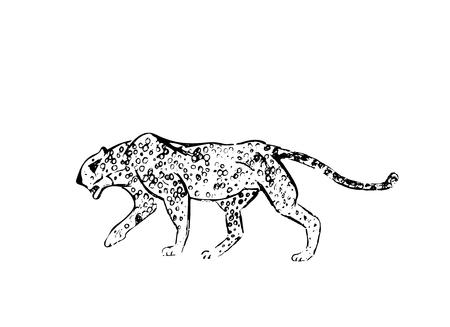 Cheetah. Hand drawn ink sketch. Horizontal drawing. Vector engraving. Predator line art. Black line illustration isolated on white background. Фото со стока