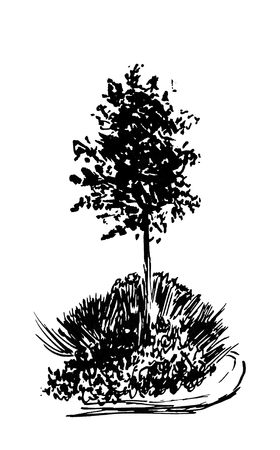 Tree sketch.Vintage illustration, engraved style. Hand drawn ink. Back line drawing Isolated on white background. For landscape, park, outdoors design.