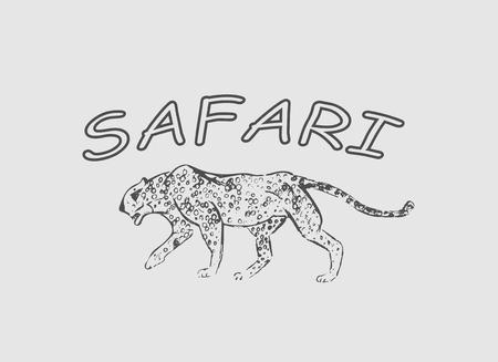 Cheetah. Hand drawn ink sketch. Horizontal drawing. Vector engraving. Predator line art. Black line illustration isolated on light gray background. Safari concept. Фото со стока