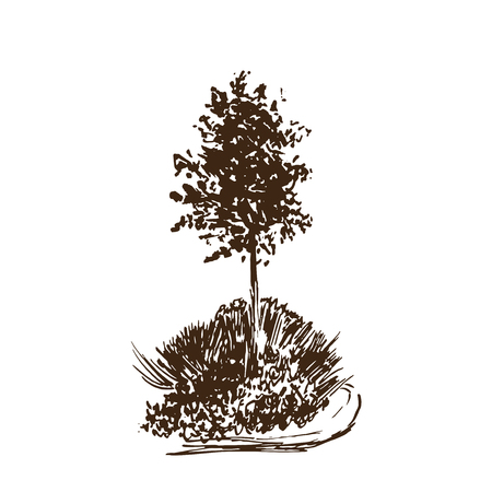 Tree vector sketch.Vintage illustration, engraved style. Hand drawn ink. Brown Line drawing Isolated on white background. For landscape, park, outdoors design. Ilustração