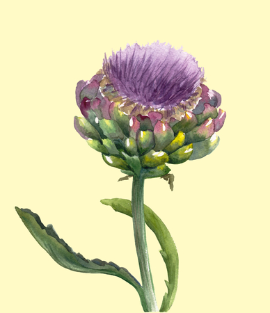 Fresh organic artichoke flower (Cynara scolymus) isolated on light yellow background. Watercolor botanical illustration. Eco vegetarian food. Hand painted poster or print. Realistic style.