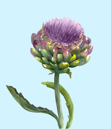 Fresh organic artichoke flower (Cynara scolymus) isolated on blue background. Watercolor botanical illustration. Eco vegetarian food. Hand painted poster or print. Realistic style.