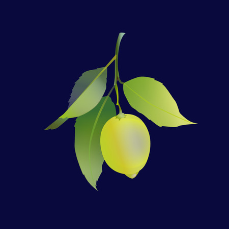 Lemon fruit with leaves isolated on black background. Fresh citrus. Vector illustration. Banco de Imagens