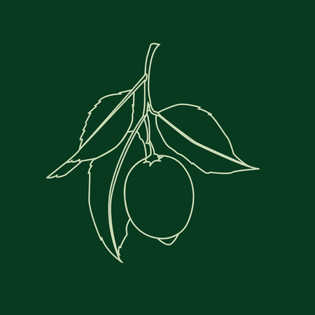 Lemon fruit with leaves. Line drawing isolated on dark green background. Fresh citrus. Vector illustration. Banco de Imagens