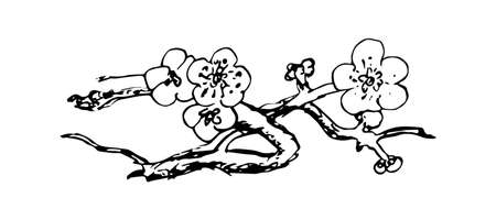 Cherry Blossom. Branch with flowers. Black and white Coloring book.Sakura plant isolated on white background. Hand drawn vector illustration. Engraved style
