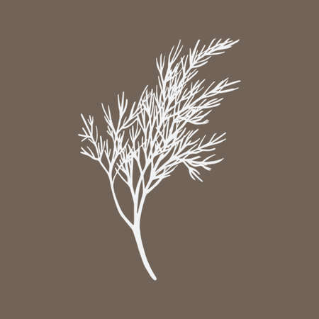 Fresh fennel branch isolated on beige background. Dill bunch illustration