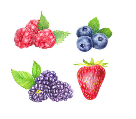 Set of wild berries isolated on white background. Blueberry, blackberry, raspberry and strawberry. Close up view. Hand drawn illustration Watercolor illustration. Realistic botanical art.