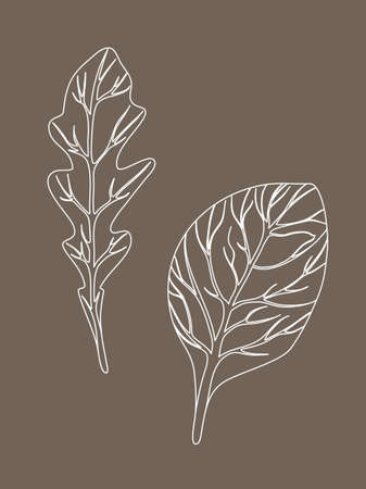 Arugula rucola (rocket salad) and spinach. Leaves isolated on beige background. Line Vector illustration. Fresh herbs. Vegetarian Ingredient. Organic food. Logo, packaging, print, market store