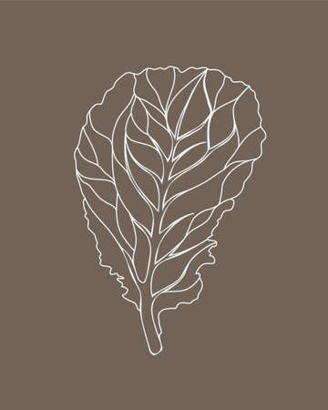 Fresh Lettuce Green salad. One leaf isolated on beige background. Vector white Outline. Hand drawn illustration. Tasty food or cooking ingredient