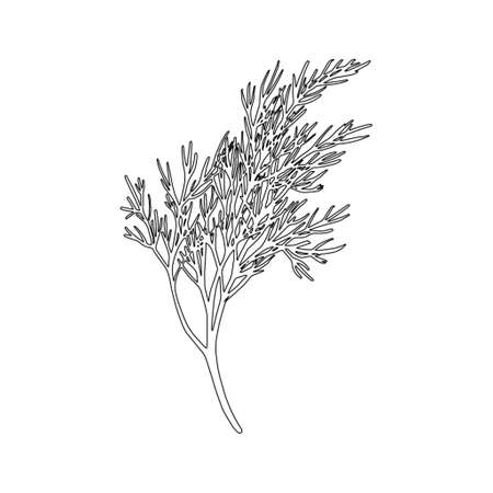Fresh fennel branch isolated on white background. Dill bunch. Vector illustration Stock Illustratie