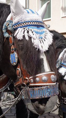 Munich, Germany, a horse dressed in decorative leather bridle for Oktoberfest, with blue and white ear bonnet 版權商用圖片