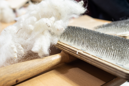 Raw fleece and carding brush for spinning